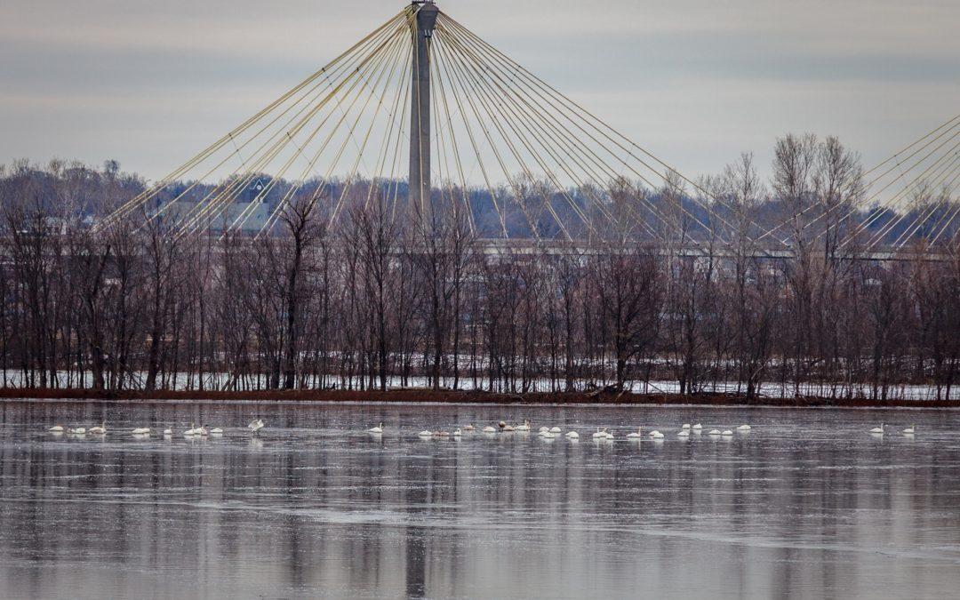 Bird Photography at Riverlands Migratory Bird Sanctuary