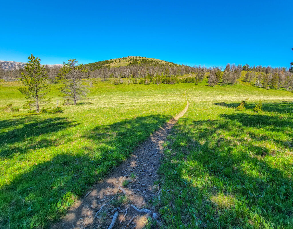 Alpine meadow on Olson Creek Trail