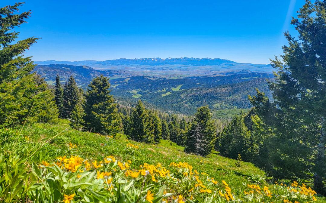 Wildflower hike with views – Olson Creek Trail, Bozeman MT