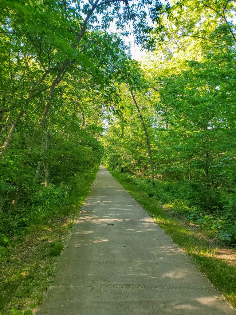 Sauk Rail Trail trees