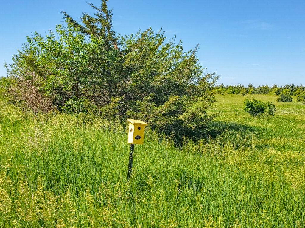 Sauk River Trail Iowa Hawkeye birdhouse