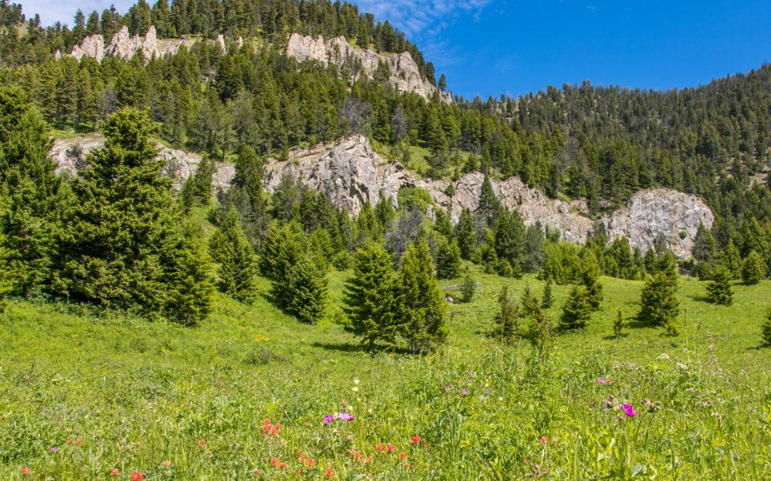 Bozeman Hike – Middle Cottonwood Creek Trail